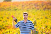 Farmer man in vineyard harvest autumn leaves in mediterranean field