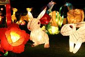 rabbit lanterns