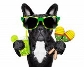 stock photo of french-toast  - brazilian french bulldog with cocktail and shakers - JPG