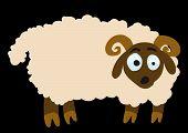 surprised lamb