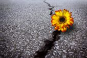Flower In Asphalt