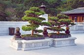 Bonsai trees in the Chi Lin Nunnery garden