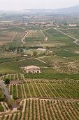 Alavesa Vineyards, La Rioja, Northern Spain