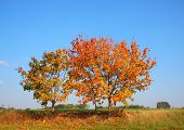 Autumn Tree On Hill Top With Fresh Color