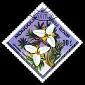 Vintage  Postage Stamp. The Flowerses Potaninia Mongolica.