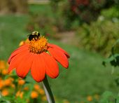Busy Bee on Flower