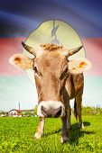 Cow With Flag On Background Series - New Caledonia