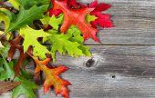 Bright Autumn Leaves On Age Wood