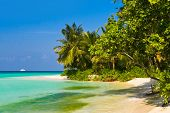 Tropical jungle and beach, vacation background