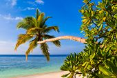 Bending palm tree on tropical beach - vacation background