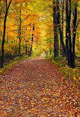 Walk In The Autumn Wood