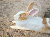 white baby rabbit