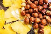 Raw Organic Hazelnuts