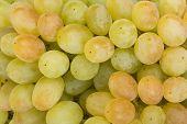Juicy Green Grapes Close-up