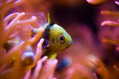 Tropical Fish And The Reef