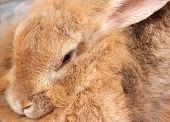 Rabbit Is Light Brown