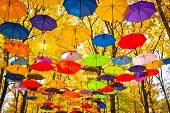 stock photo of fall day  - bright umbrellas flying in the sky against a background of yellow leaves of the trees in late autumn - JPG
