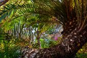 Jungle park at Tenerife Canary - nature travel background