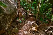 Pathway in jungle - Vallee de Mai - Seychelles - travel background