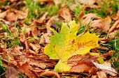 Dry Leaves On Green Grass