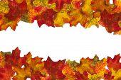 Autumn Leaf Stripe 1 Background