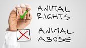 Marking Check Boxes For Animal Rights And Abuse