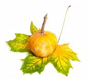 Small Decorative Pumpkin On Autumn Yellowed Maple-leaf