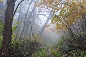Foggy forest trail in Autumn - Shenandoah National Park - Virginia