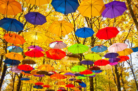 picture of yellow  - bright umbrellas flying in the sky against a background of yellow leaves of the trees in late autumn - JPG