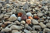 foto of pumice-stone  - Seashells and pumice stones on rocky beach. Abstract background.