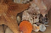 stock photo of echinoderms  - close up view on Multi - JPG