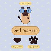 picture of siamese  - Infographic show detail of seal siamese cat eye color nose color and foot color - JPG