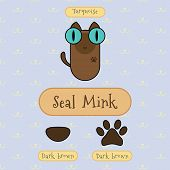 picture of mink  - Infographic show detail of seal mink cat eye color nose color and foot color - JPG