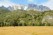 picture of pain-tree  - Landscape of Patagonia - JPG