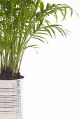 image of stewardship  - A photo of a houseplant in a silver can - JPG
