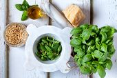stock photo of seed  - Ingredients for pesto sauce - JPG