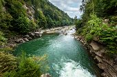 picture of coniferous forest  - mountain river - JPG