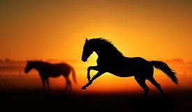 stock photo of orange  - Silhouette of beautiful horse on a background of sunrise - JPG
