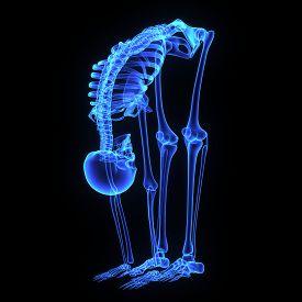 stock photo of girdles  - The hip bone is formed by three bones - JPG