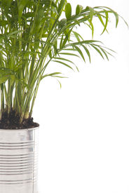 picture of stewardship  - A photo of a houseplant in a silver can - JPG