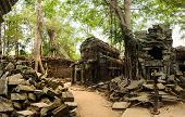 foto of raider  - Ta Prohm - JPG