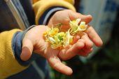 Nursery hand with flower