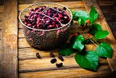 picture of mulberry  - the berries of an organic mulberry picked in a garden - JPG