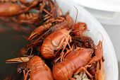pic of creole  - Red boiled crayfish in the pan at a market - JPG