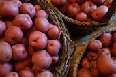 picture of solanum tuberosum  - Basket full of fresh new potatoes locally grown in Florida - JPG