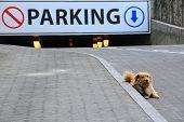image of stray dog  - Stray dog lies next to underground parking garage - JPG