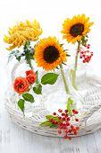 stock photo of chrysanthemum  - Sunflowers - JPG