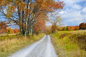 pic of virginia  - Tree with vibrant fall colors along gravel road in Canaan Valley - JPG