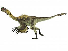 stock photo of omnivore  - Citipati was a omnivorous theropod dinosaur that lived in Mongolia during the Cretaceous Period - JPG