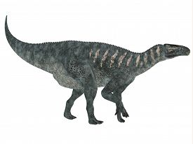 image of herbivore  - Iguanodon was a herbivorous dinosaur that lived in Europe during the Cretaceous Period - JPG